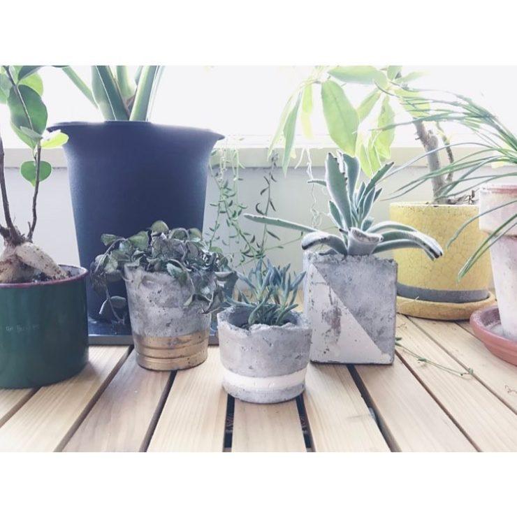 【Decortokyo】ワークショップのお知らせ!セメントプランターでお部屋にグリーンを。